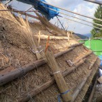 屋根に渡したはせ木が押さえと足場にもなる